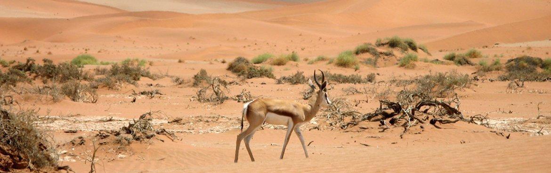namibia sio