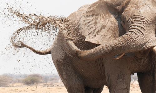 volontariato elefanti