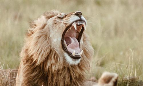 leone botswana