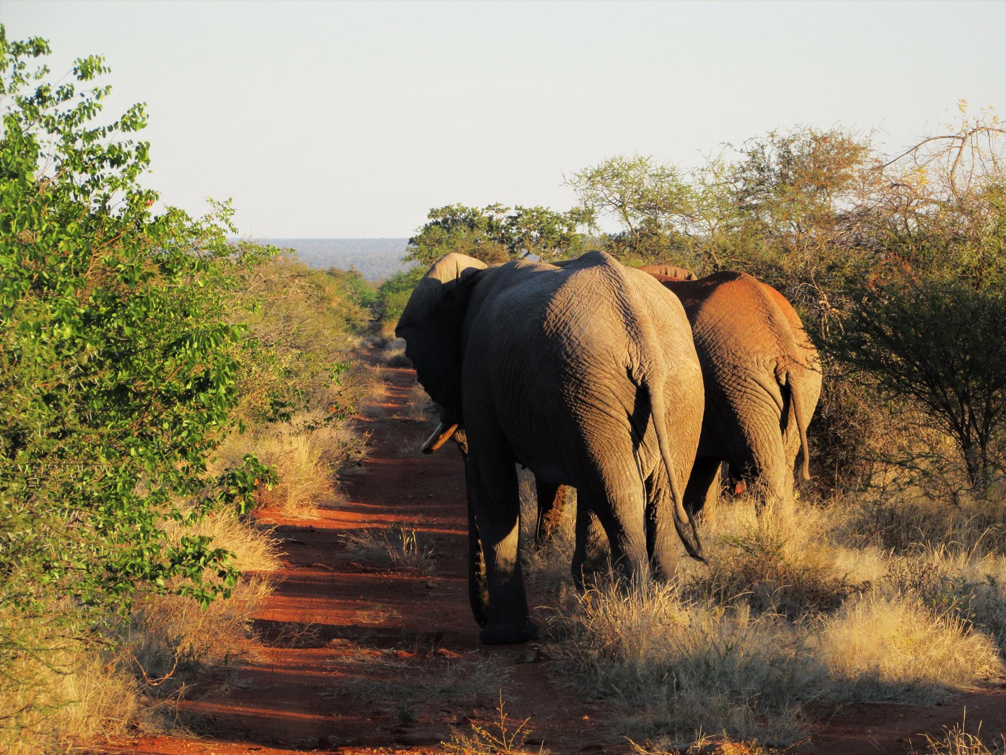 volontariato botswana