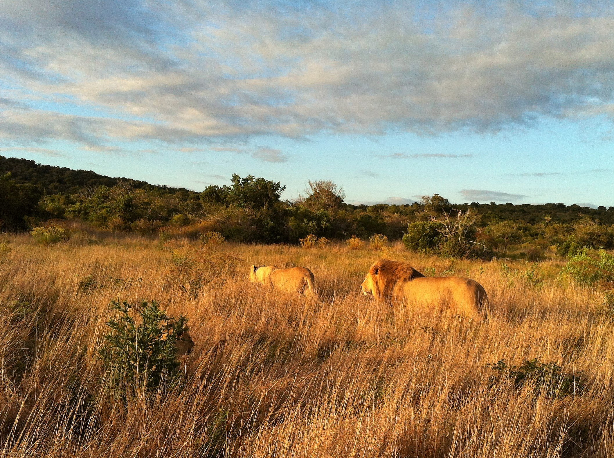 leoni volontariato sudafrica