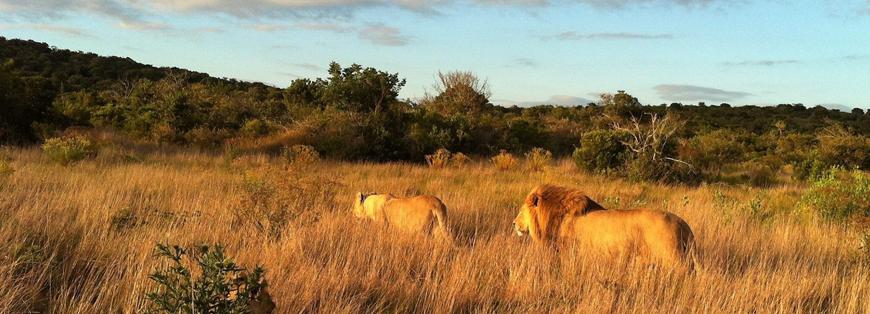 volontariato naturalistico sudafrica 2