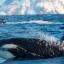 sfondo orche 2