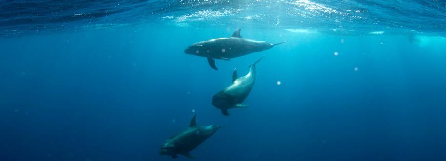 delfini la maddalena