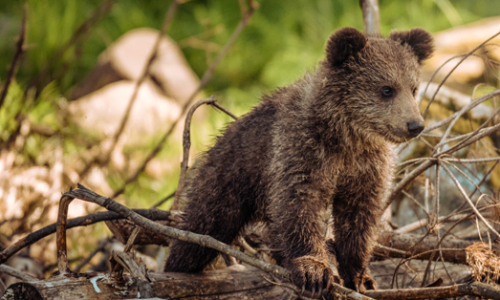 viaggio orsi e leggende ecoway